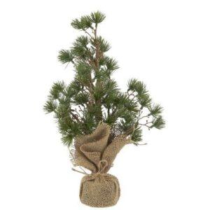 Juletræ Ceder med jutefod - H 43 cm